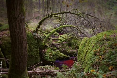 red creek