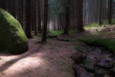 magic wood 1