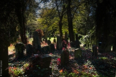 jewesh cemetery 8