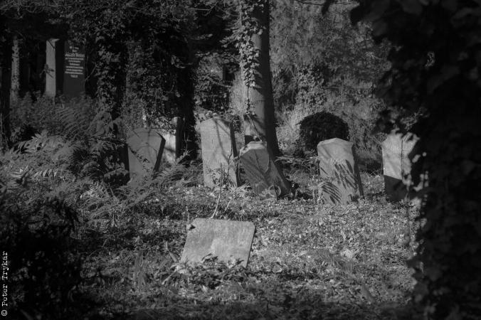 jewesh cemetery 7
