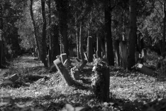 jewesh cemetery 6