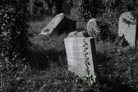 jewesh cemetery 5