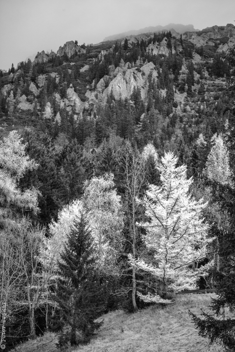 landscape arround Mariazell 3