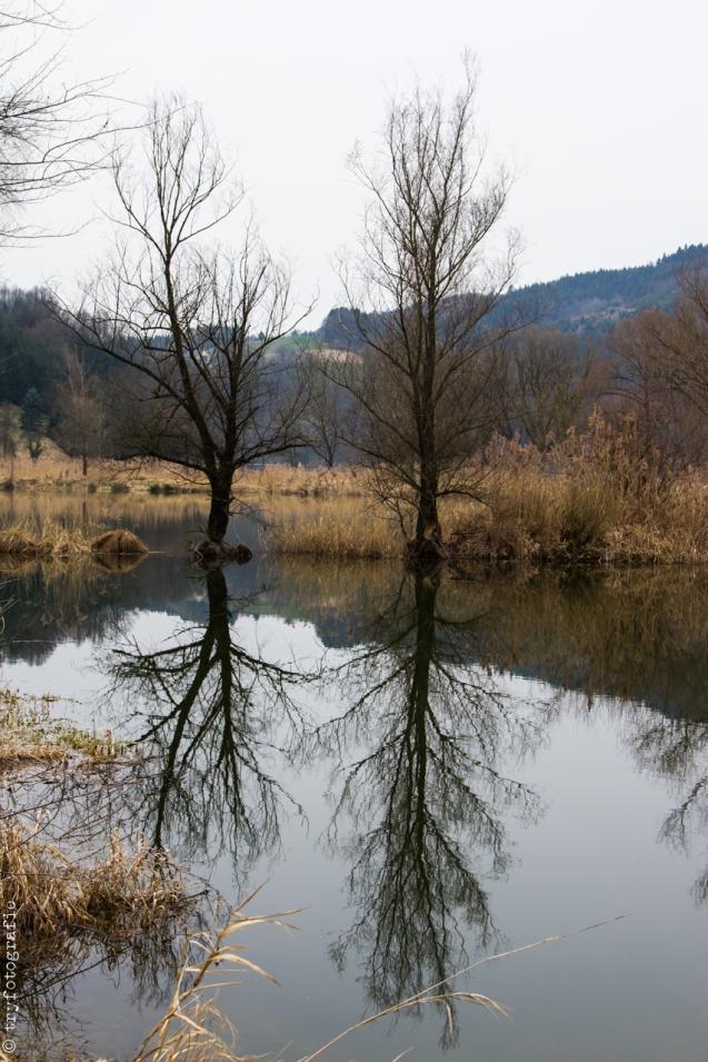 Danube Sidearm