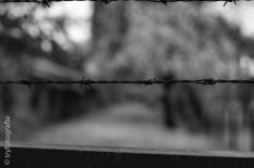 auschwitz-stammlager-40